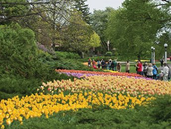 Tourists looking at the colourful tulips at Ottawa's Canadian Tulip Festival
