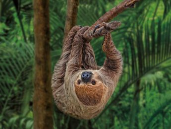Museum of Nature - Sloth